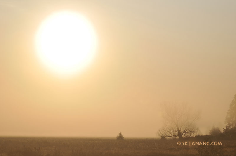 The Sun through the fog 5352